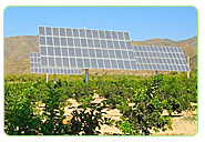 fruit orchards farm solar power supply