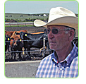 solar cattle feedlots
