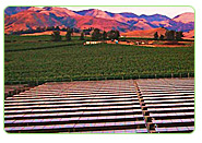 solar energy use in agriculture industry
